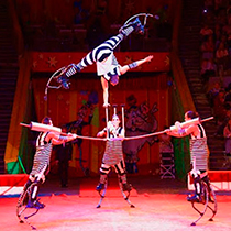 Extreme Circus Group 106378